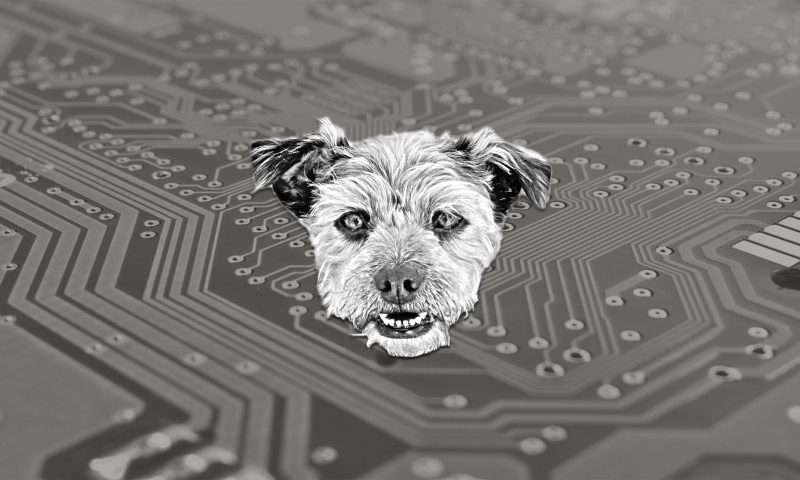 Picture of Gray Dog Digital